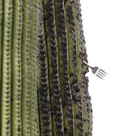 saguaro with fork 0299 detail.jpg