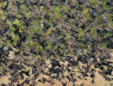 starlings-landing-2072.jpg