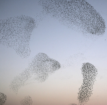 flocks of starlings photographed above the railroad terminal in Rome