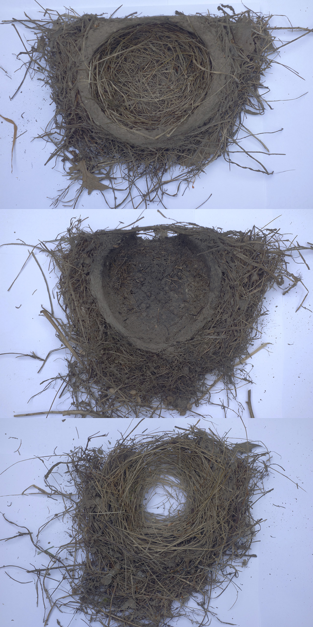 Three robin nests.