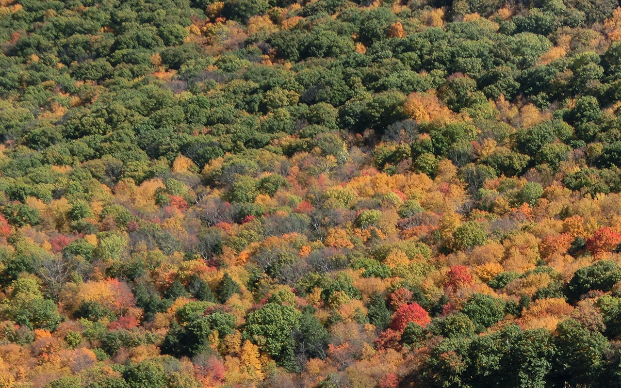 Trees in fall foliage near where Mass. Route 116 crosses the Holyoke Range (a saddle point known as the Notch).